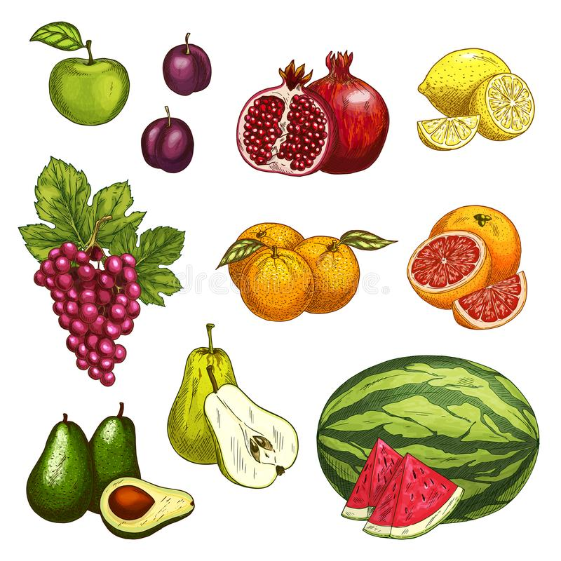 Σκίτσο φρούτων του φρέσκου γλυκού μούρου για το σχέδιο τροφίμων διανυσματική απεικόνιση