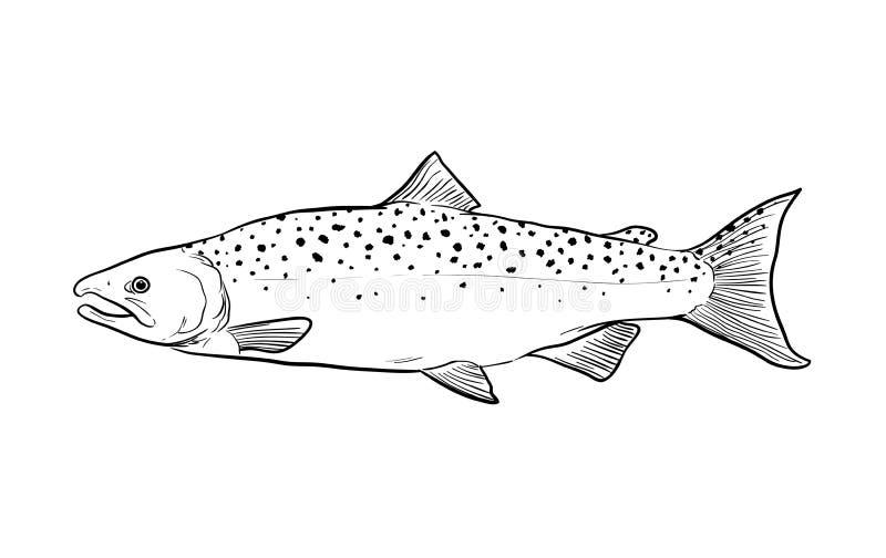 Σκίτσο Doodle ψαριών σολομών απεικόνιση αποθεμάτων