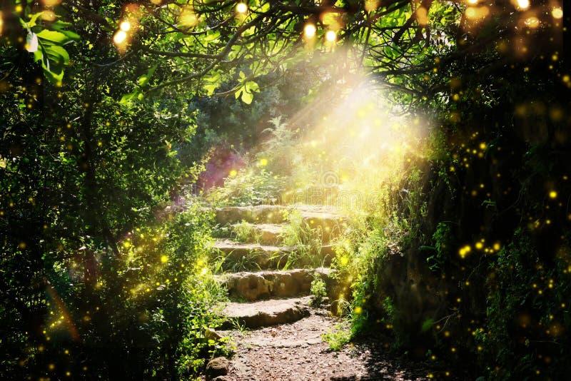 Σκαλοπάτια δρόμων και πετρών στο μαγικό και μυστήριο σκοτεινό δάσος με το μυστικά φως και το firefly ήλιων Έννοια παραμυθιού διανυσματική απεικόνιση