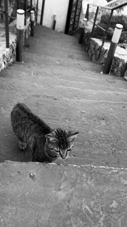 Σκαλοπάτια με μια μικρή γάτα στοκ εικόνες με δικαίωμα ελεύθερης χρήσης