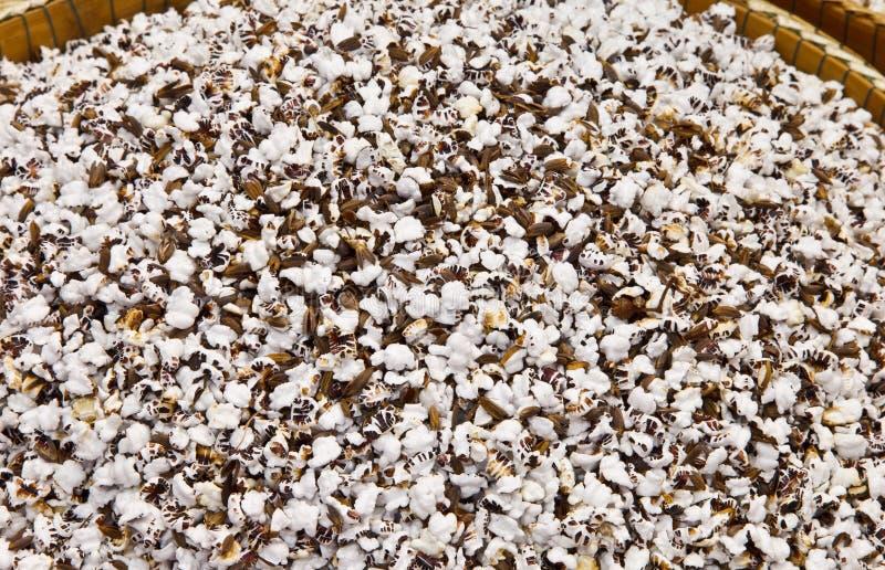 Σκαμένο ρύζι στοκ εικόνα με δικαίωμα ελεύθερης χρήσης