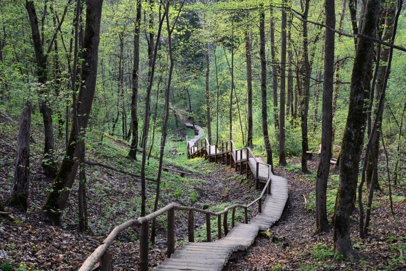 Σκαλοπάτια σε άγνωστο, Sigulda, Λετονία στοκ εικόνα