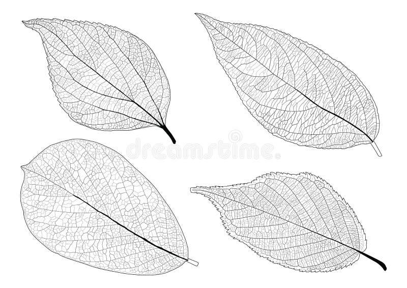 Σκελετικά φύλλα που ευθυγραμμίζονται στο άσπρο υπόβαθρο απεικόνιση αποθεμάτων