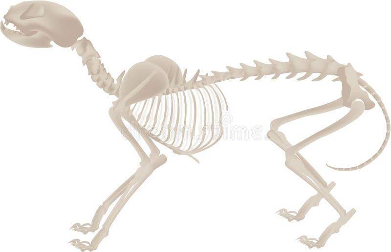 σκελετός σκυλιών διανυσματική απεικόνιση