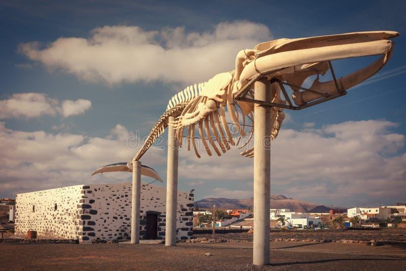 Σκελετός φαλαινών στα αλατισμένα τηγάνια της Carmen στο caleta de Fuste, Fuerteventura, Κανάρια νησιά, Ισπανία στοκ εικόνες