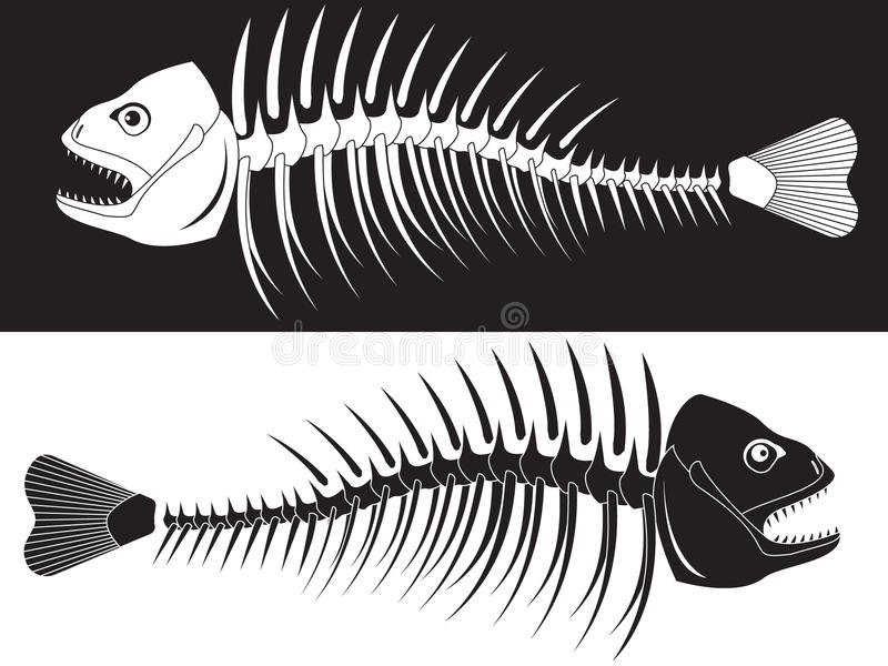 σκελετός ψαριών στοκ φωτογραφία με δικαίωμα ελεύθερης χρήσης
