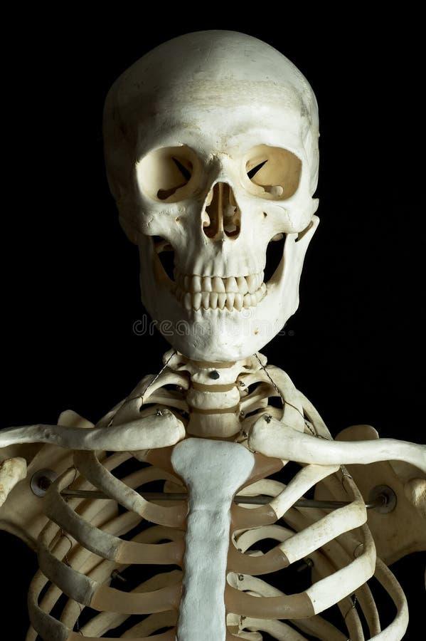 σκελετός 2 Στοκ Εικόνες