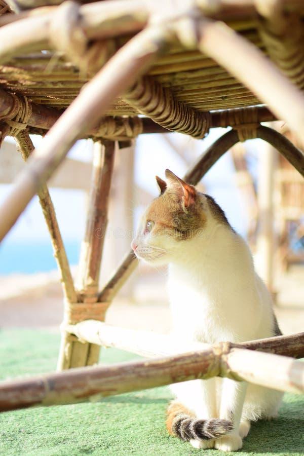 Σκεπτόμενη γάτα στοκ φωτογραφίες