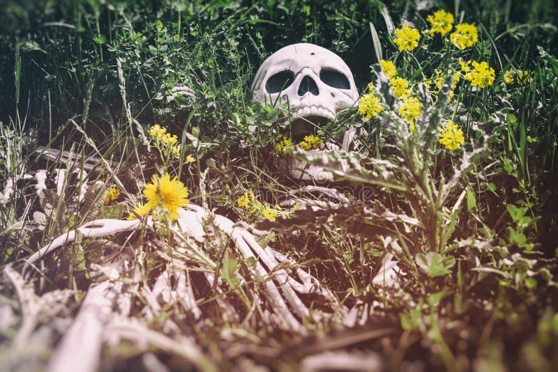 Σκελετός στη χλόη 9 στοκ εικόνες
