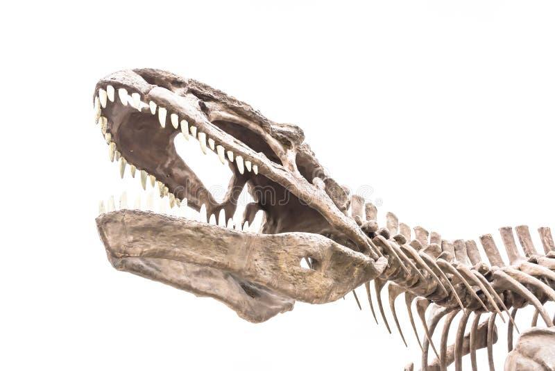 σκελετός της πόρτας δεινοσαύρων έξω με το άσπρο σύννεφο στοκ φωτογραφίες
