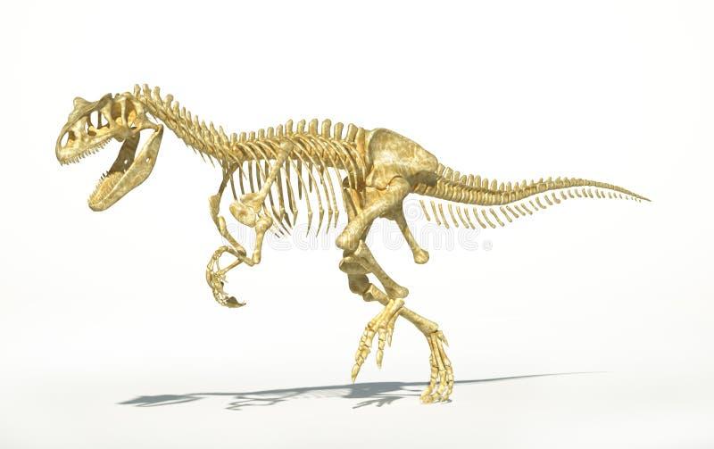 Σκελετός Allosaurus photo-realistic, επιστημονικά σωστός. απεικόνιση αποθεμάτων