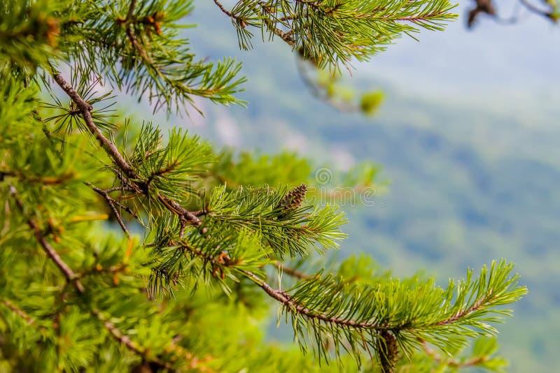 Σκηνές κοντά στο θέλγητρο βράχου και λιμνών καπνοδόχων στα μπλε βουνά ν κορυφογραμμών στοκ εικόνα με δικαίωμα ελεύθερης χρήσης