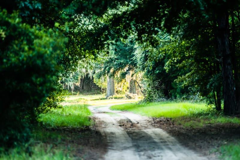Σκηνές στη φυτεία κόλπων βοτανικής κοντά στη νότια Καρολίνα του Τσάρλεστον στοκ εικόνα