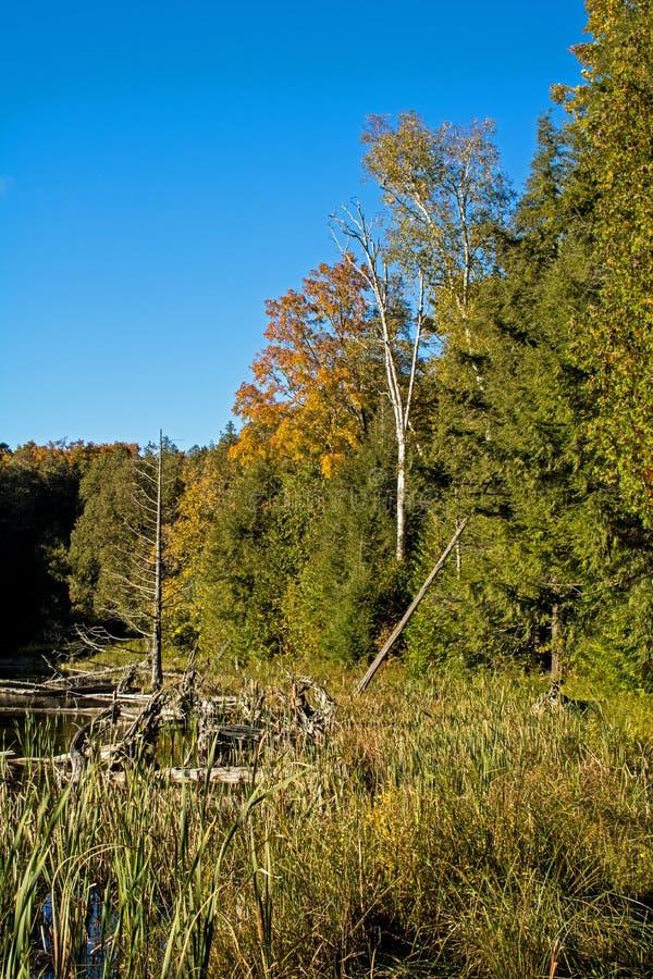 Σκηνή αγριοτήτων φθινοπώρου στο Οντάριο, Καναδάς στοκ εικόνα με δικαίωμα ελεύθερης χρήσης