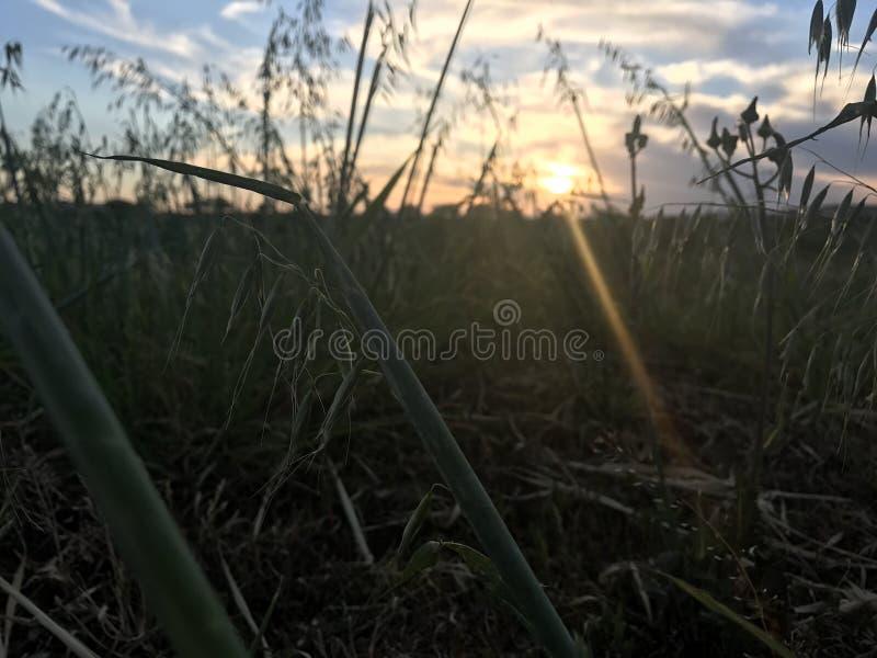 Σκηνή αγροτικών τομέων ηλιοβασιλέματος στοκ εικόνες