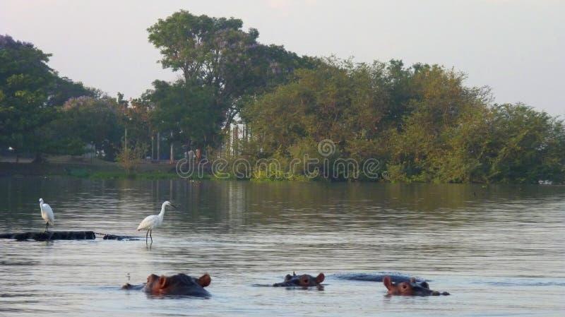 Σκηνή από την Κένυα στοκ φωτογραφίες με δικαίωμα ελεύθερης χρήσης