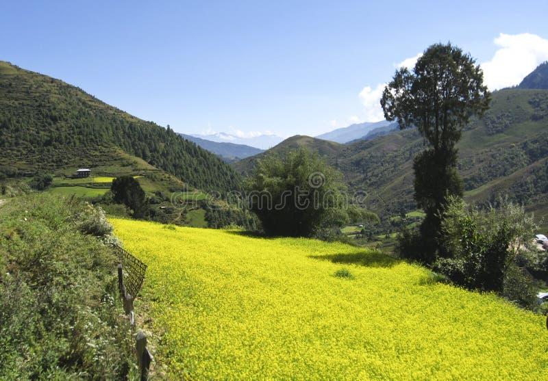Σκηνή καλλιέργειας ηλίανθων από το κεντρικό Μπουτάν στοκ εικόνα με δικαίωμα ελεύθερης χρήσης