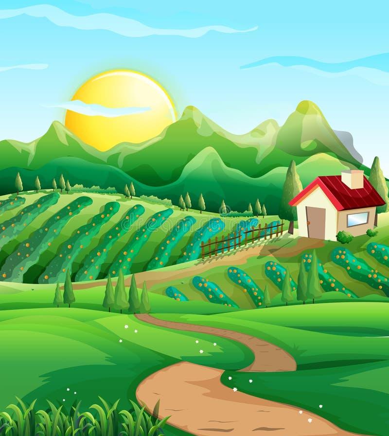 Σκηνή με τα λαχανικά στην αυλή διανυσματική απεικόνιση