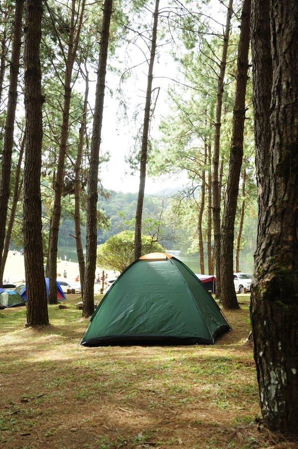 Σκηνή που στρατοπεδεύει μεταξύ του δάσους πεύκων, υπαίθρια δραστηριότητα τουρισμού στοκ φωτογραφίες με δικαίωμα ελεύθερης χρήσης