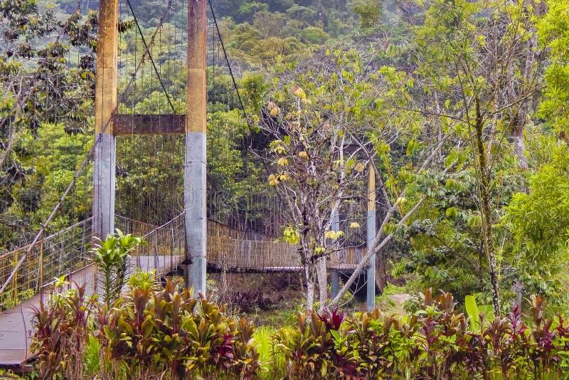 Σκηνή τοπίων στην του Εκουαδόρ πλευρά της Αμαζονίας στοκ εικόνες