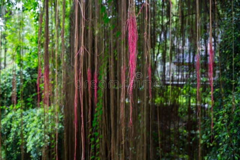 Σκηνή φαντασίας του ρόδινου δάσους με τα δέντρα και τον κισσό στοκ εικόνες