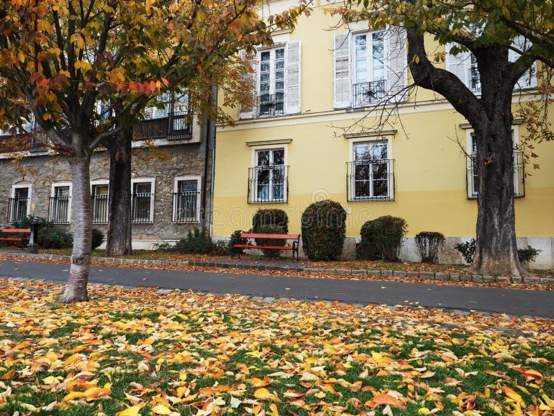 Σκηνή φθινοπώρου με τα φύλλα πτώσης στοκ φωτογραφίες