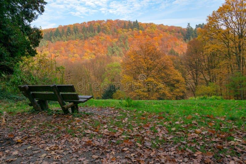 Σκηνή φθινοπώρου στο δάσος: άποψη σχετικά με έναν λόφο που καλύπτεται με τα ζωηρόχρωμους δέντρα και τον πάγκο στο πρώτο πλάνο στοκ εικόνες