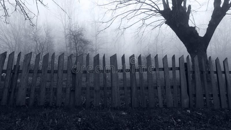 Σκηνή φρίκης του δάσους της Misty στοκ εικόνα με δικαίωμα ελεύθερης χρήσης