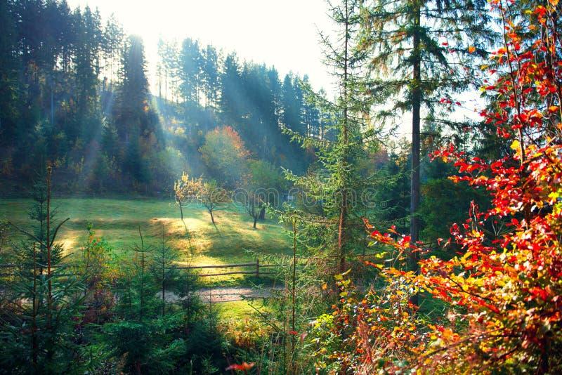 Σκηνή φύσης φθινοπώρου Όμορφο misty παλαιό δάσος πρωινού στοκ εικόνες