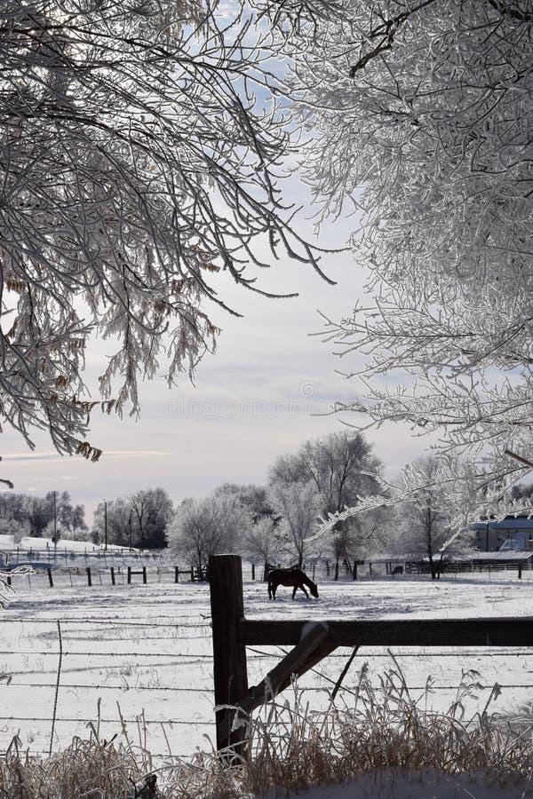 Σκηνή χειμερινών αγροκτημάτων στοκ φωτογραφίες με δικαίωμα ελεύθερης χρήσης