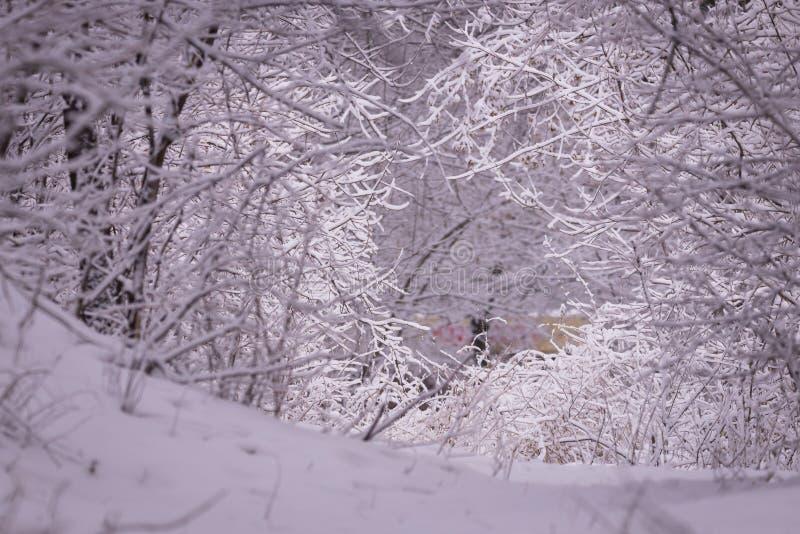 Σκηνή χειμερινών τοπίων με το μειωμένο χιόνι - δάσος χωρών των θαυμάτων με τις χιονοπτώσεις Χιονώδης σκηνή με τα Χριστούγεννα και στοκ εικόνες με δικαίωμα ελεύθερης χρήσης