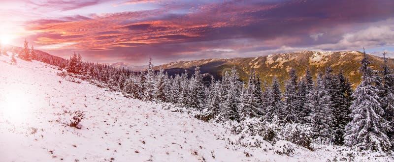 Σκηνή χωρών των θαυμάτων Ζωηρόχρωμο τοπίο στο χειμερινό ηλιοβασίλεμα στο δάσος βουνών στοκ εικόνα με δικαίωμα ελεύθερης χρήσης