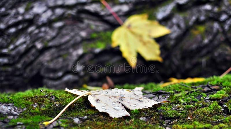 Σκηνή 2 φθινοπώρου στοκ εικόνες με δικαίωμα ελεύθερης χρήσης