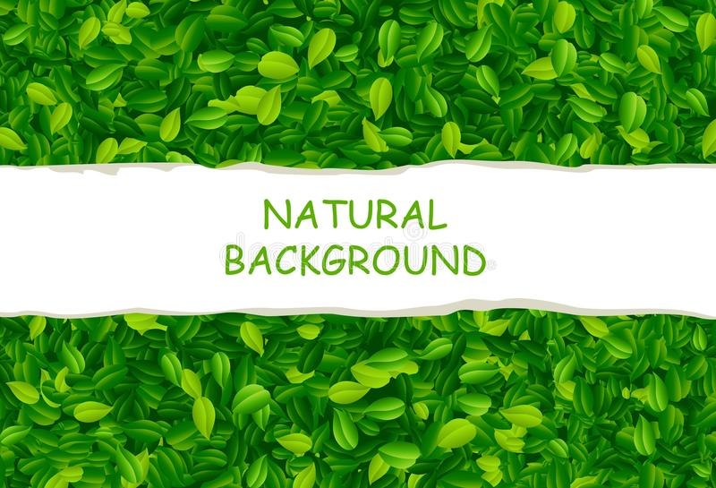 Σκηνικό με τα πράσινα φύλλα ελεύθερη απεικόνιση δικαιώματος