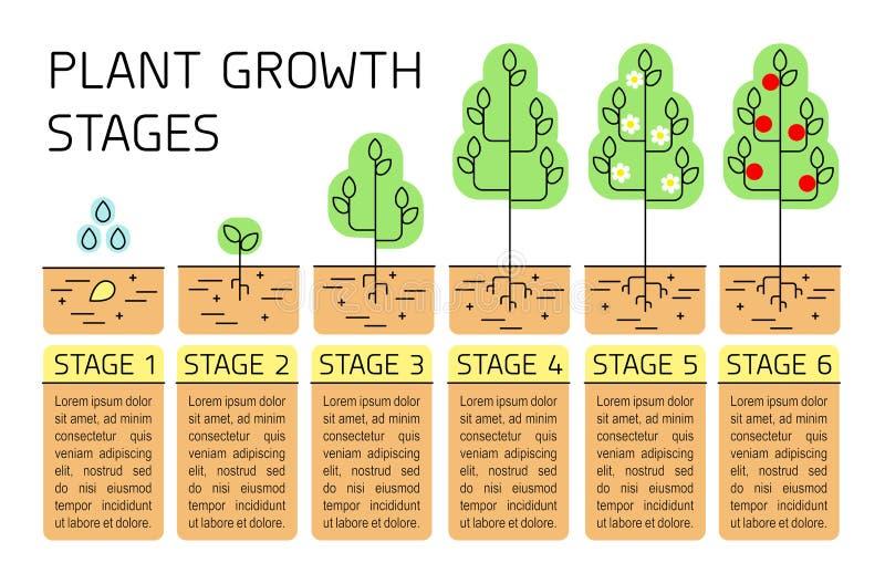 Σκηνικό infographics αύξησης δέντρων Εικονίδια τέχνης γραμμών Φύτευση του προτύπου οδηγίας Γραμμική απεικόνιση ύφους που απομονών διανυσματική απεικόνιση