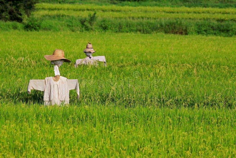 Σκιάχτρο και το αγρόκτημα στοκ φωτογραφία με δικαίωμα ελεύθερης χρήσης