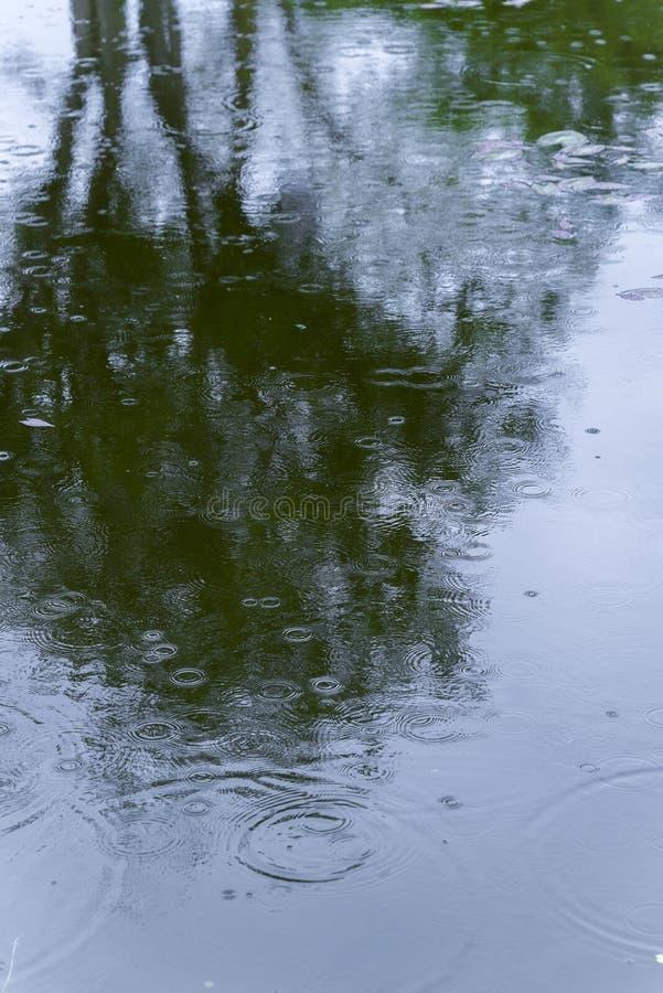 Σκιά δέντρων στα κύματα επιφάνειας στο τοξικό νερό, λύματα, ρύπανσης στοκ φωτογραφία με δικαίωμα ελεύθερης χρήσης