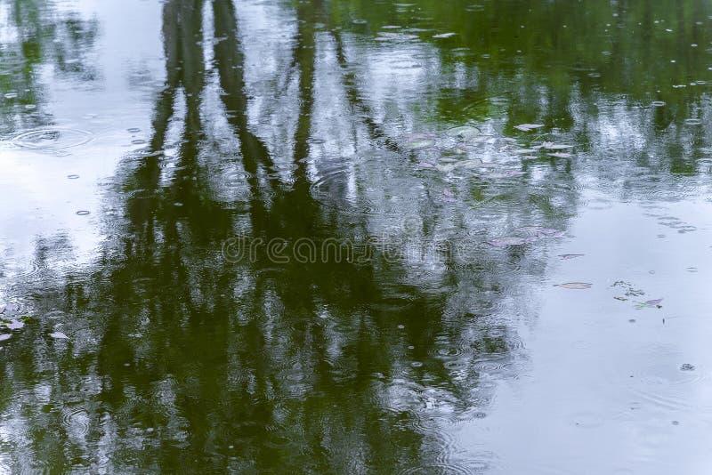Σκιά δέντρων στα κύματα επιφάνειας στο τοξικό νερό, λύματα, ρύπανσης στοκ εικόνες