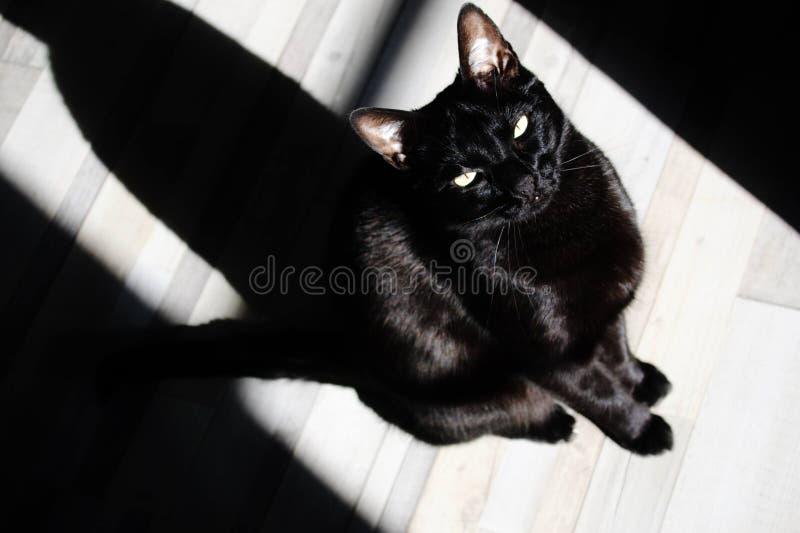 σκιά γατών στοκ εικόνα