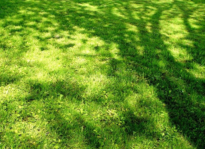 σκιά λιβαδιών Στοκ εικόνα με δικαίωμα ελεύθερης χρήσης