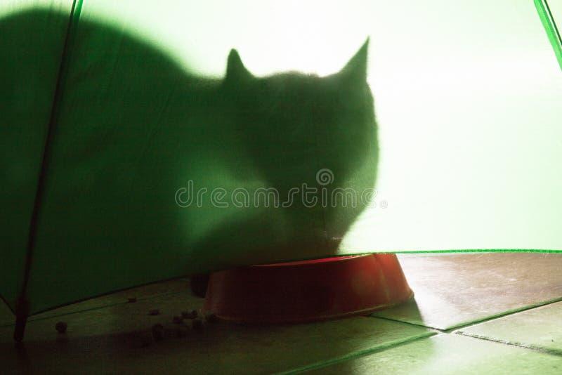 σκιά μιας γάτας σε ένα πράσινο υπόβαθρο στοκ φωτογραφίες