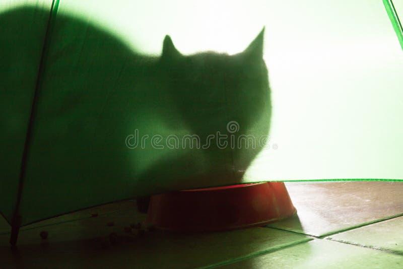 σκιά μιας γάτας σε ένα πράσινο υπόβαθρο στοκ εικόνες