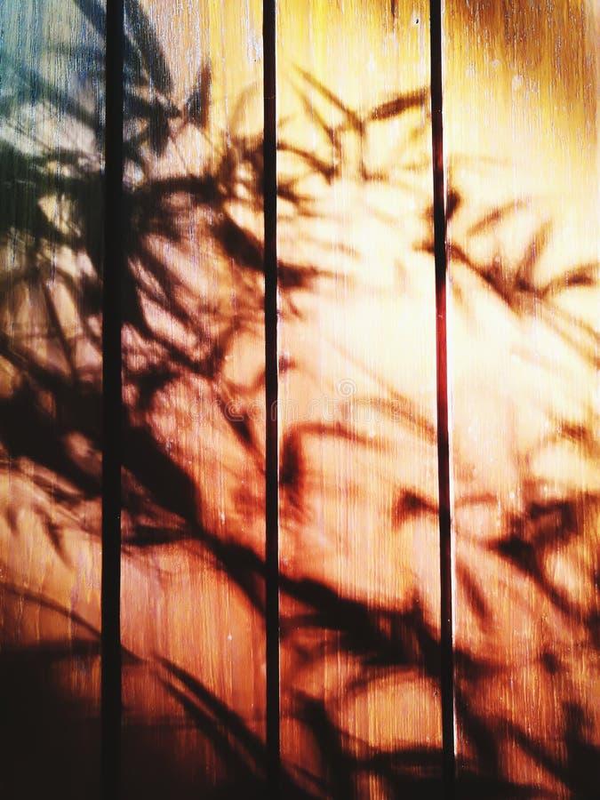 Σκιά μπαμπού στην πόρτα στοκ φωτογραφία με δικαίωμα ελεύθερης χρήσης