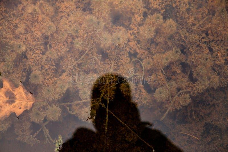 Σκιά στο νερό στοκ εικόνες με δικαίωμα ελεύθερης χρήσης