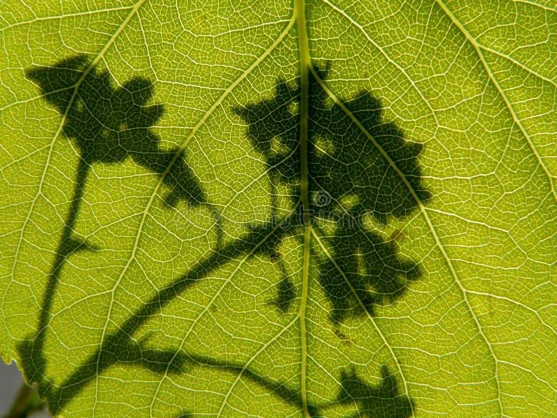 Σκιά του λουλουδιού στοκ φωτογραφίες με δικαίωμα ελεύθερης χρήσης