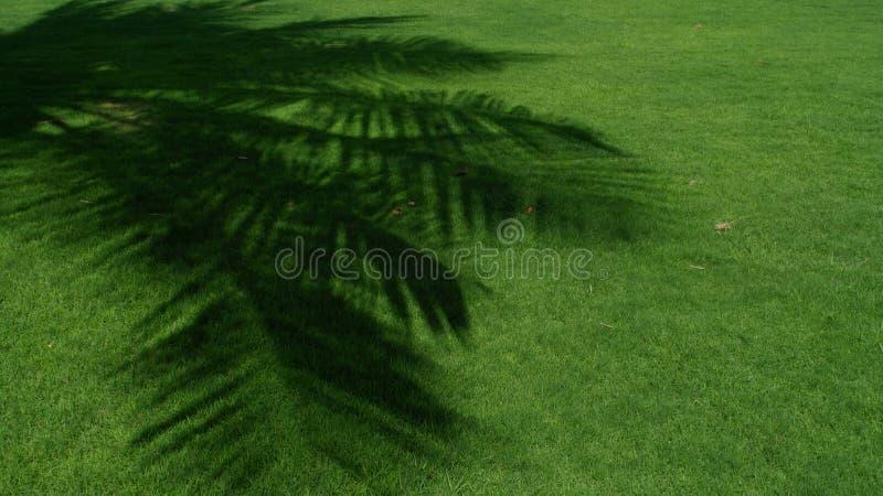Download σκιά στοκ εικόνες. εικόνα από χορτοτάπητας, φύση, φύλλο - 22786310