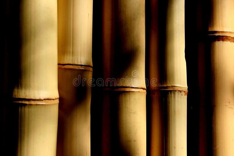 σκιές μπαμπού στοκ εικόνες με δικαίωμα ελεύθερης χρήσης