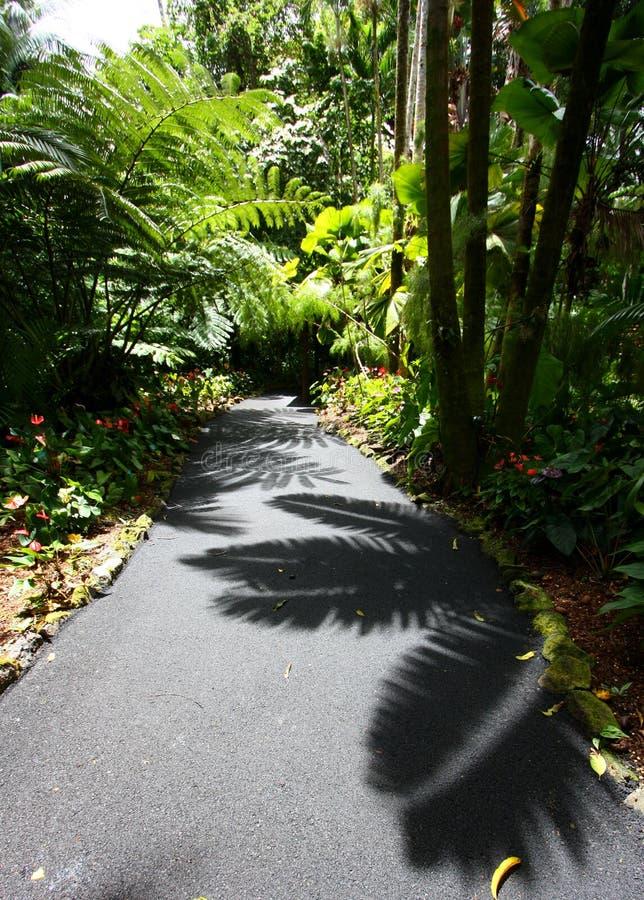 Σκιές σε ένα τροπικό τροπικό δάσος στοκ φωτογραφία με δικαίωμα ελεύθερης χρήσης