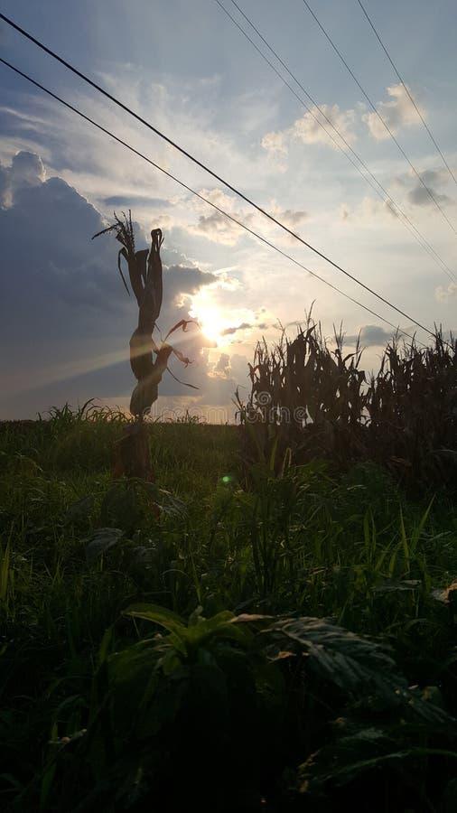 σκιές του νότου στοκ εικόνα με δικαίωμα ελεύθερης χρήσης