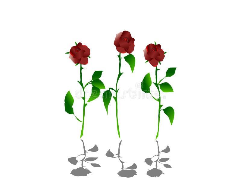 σκιές τριαντάφυλλων απεικόνιση αποθεμάτων